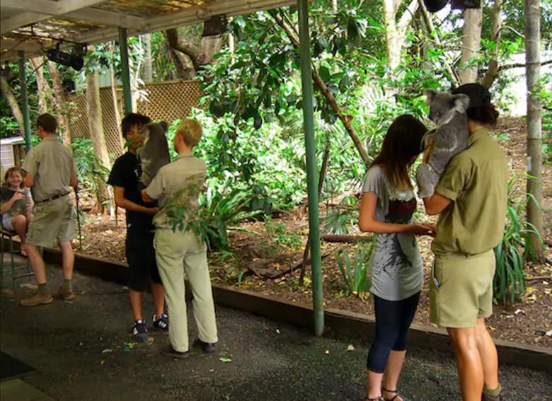 ローンパインコアラサンクチュアリのコアラ抱っこ