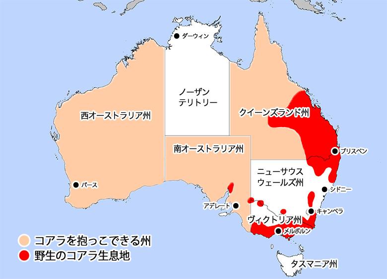 コアラ分布地図